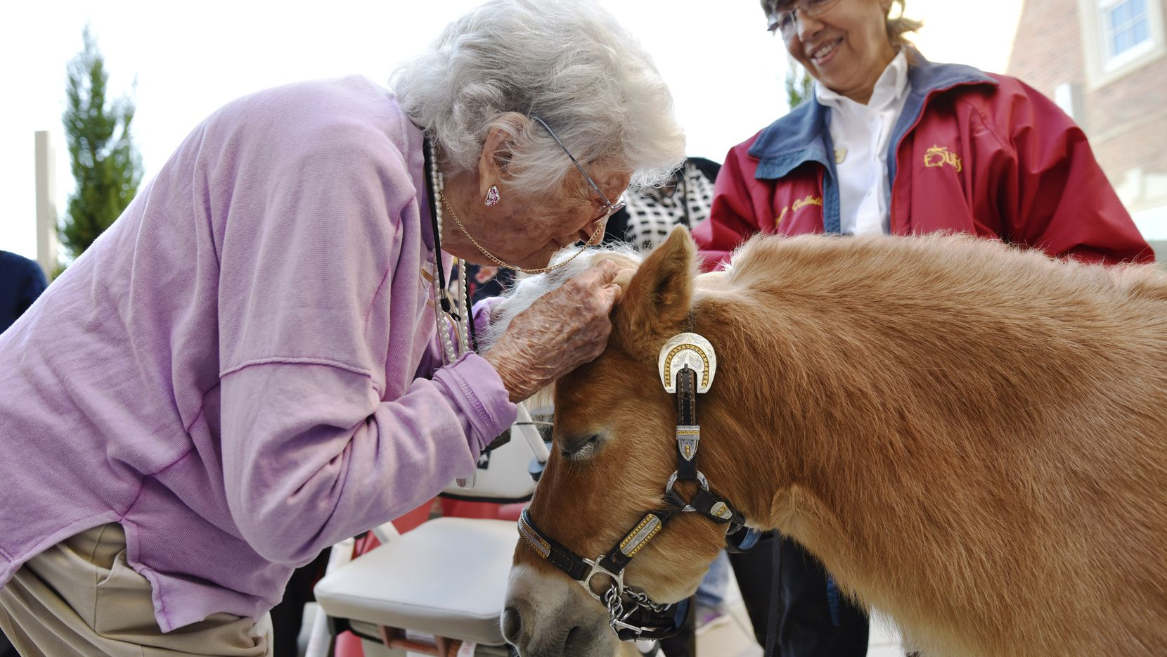 Virginia Meyers, 97, leans close to give a miniature horse named Dare a kiss on his head during a Tuesday visit at The Preston of the Park Cities retirement community.