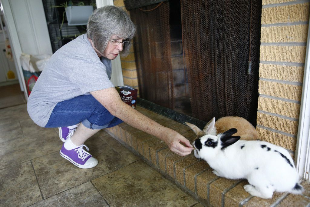 Twenty bunnies call the inside of Dianna Leggett's house home, some living in her kitchen, others in her living room and several injured rabbits in the rehab room.