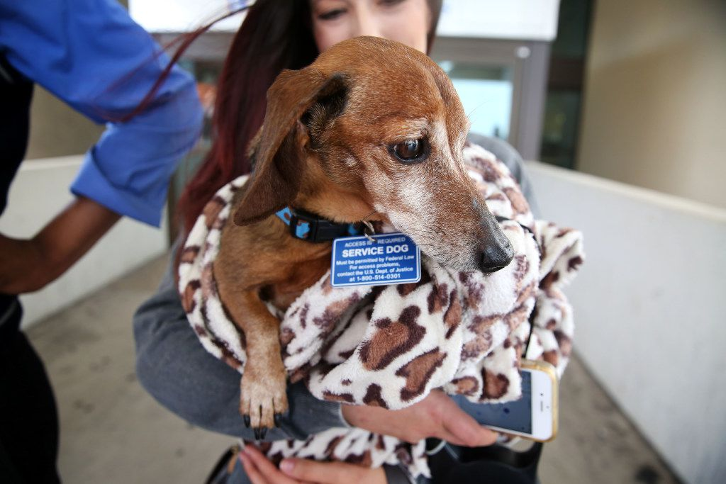 Donna Rosen holds her dog Bobo while waiting for an Uber outside DFW International Airport. Bobo was missing for over a year before Rosen was able to track him down in Oregon.