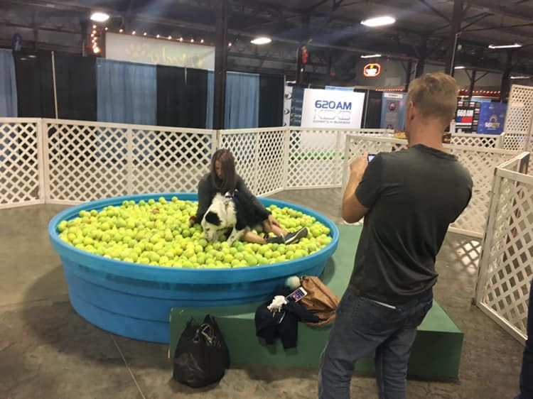 A giant dog bowl was in the art area of last year's Deck the Paws expo.