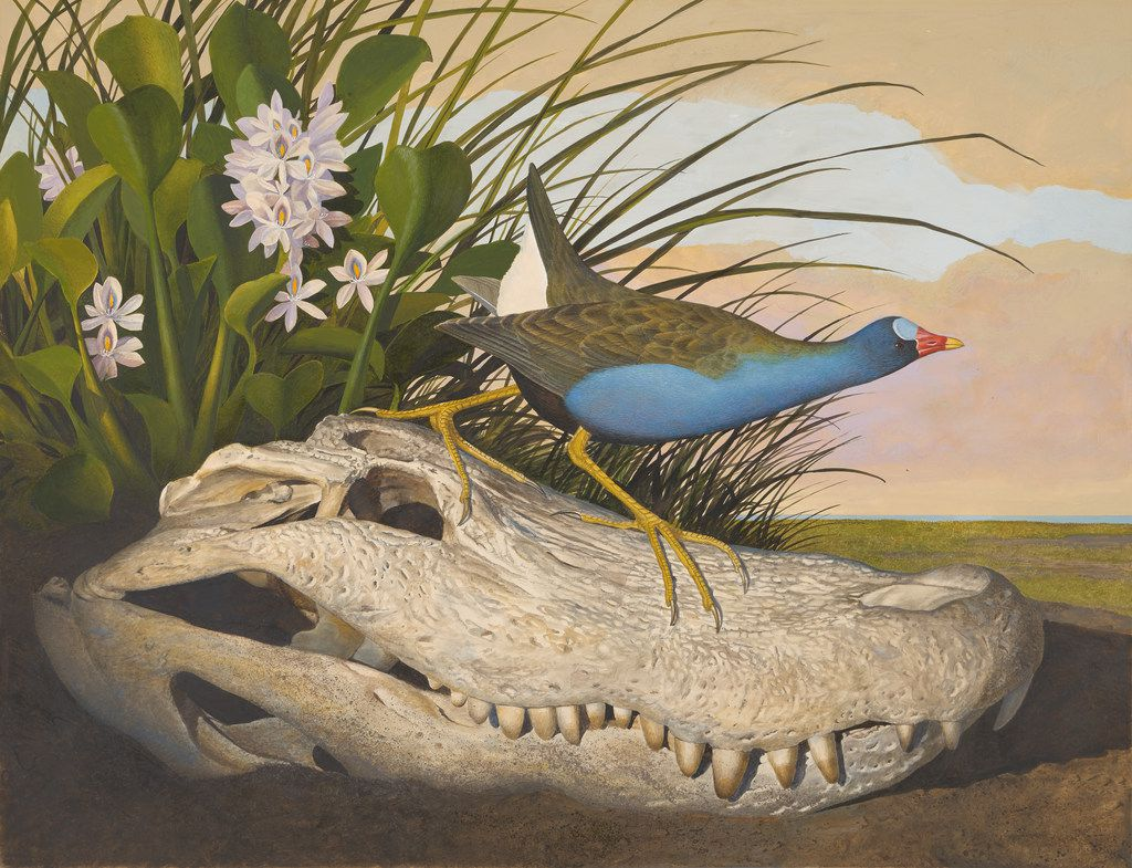 Scott and Stuart Gentlings'  Purple Gallinule is headed to the Amon Carter this fall.