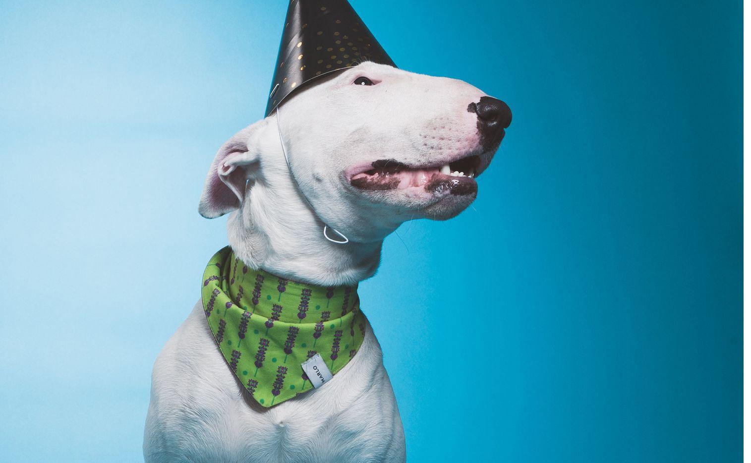 Celebra a los caninos en su día con muchas opciones.