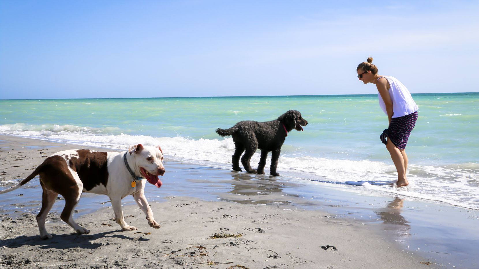 The beaches in and around Venice, Fla., draw plenty of people (and their pets) seeking sun, surf and shark teeth.