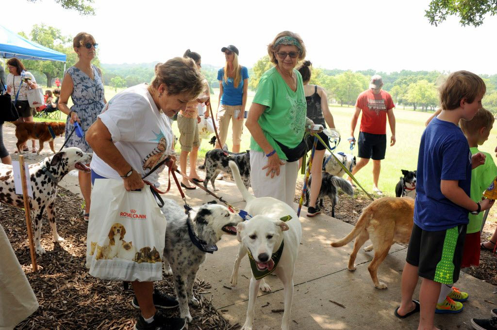 Dogs meet new friends at the 21st annual Dog Day Afternoon at Flagpole Hill in Dallas, TX on June 6, 2015.