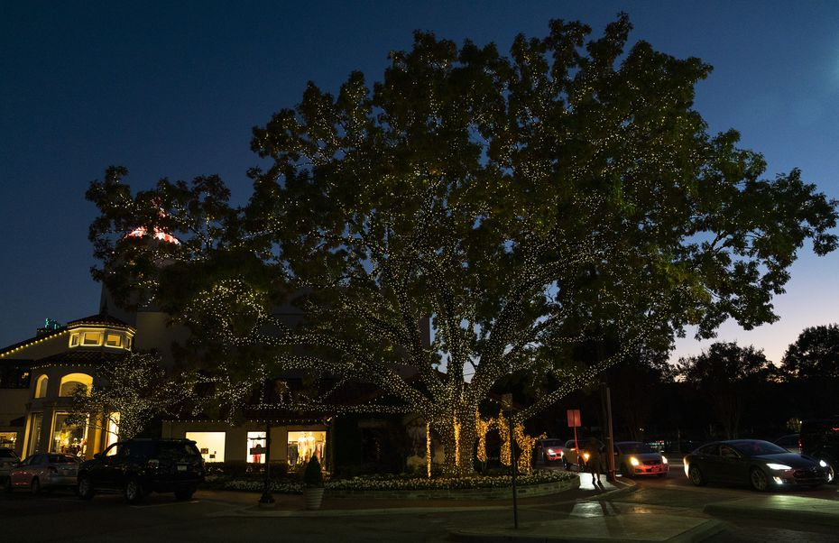 An especially large tree greets guests who enter Highland Park Village from Mockingbird Lane.