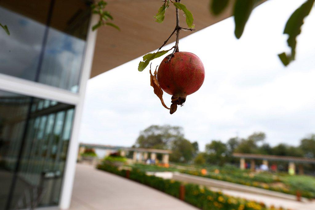 A Tasteful Place vegetable garden