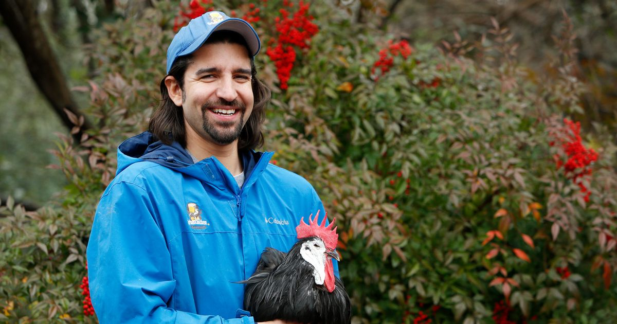 Chicken concierge gives his clients, chickenistas, something to cluck about