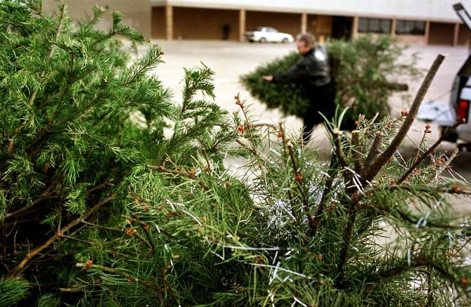 Mesquite residents can place their Christmas tree outside any Wednesday after Christmas for recycling.