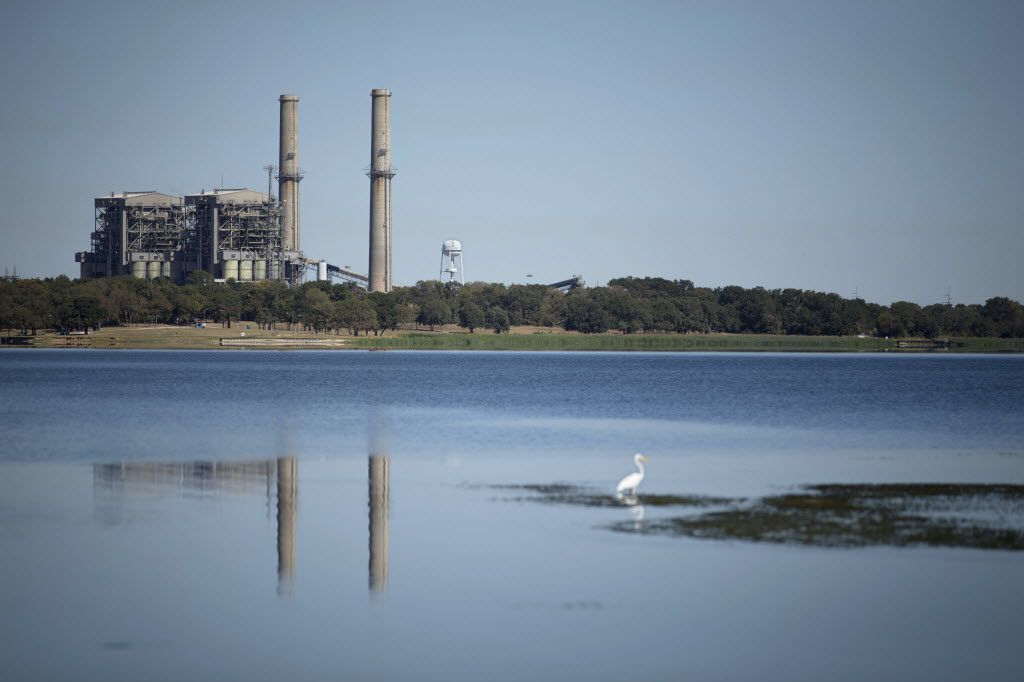 An egret perches on tall grass in Fairfield Lake State Park near the Big Brown coal plant Oct. 14, 2015, in Fairfield, Texas