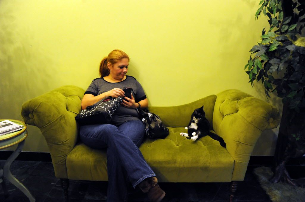 Daphne hangs out with a guest at The Charming Cat Corner.