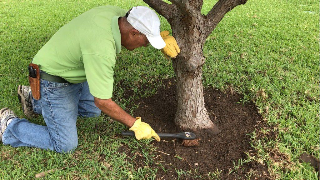 Howard Garrett carefully exposes the flare of the tree with brushes and other tools.