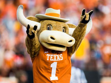 Texas Longhorns mascot Bevo cheers during the fourth quarter of a college football game between the University of Texas and West Virginia on Saturday, November 3, 2018 at Darrell Royal Memorial Stadium in Austin, Texas. (Ashley Landis/The Dallas Morning News)