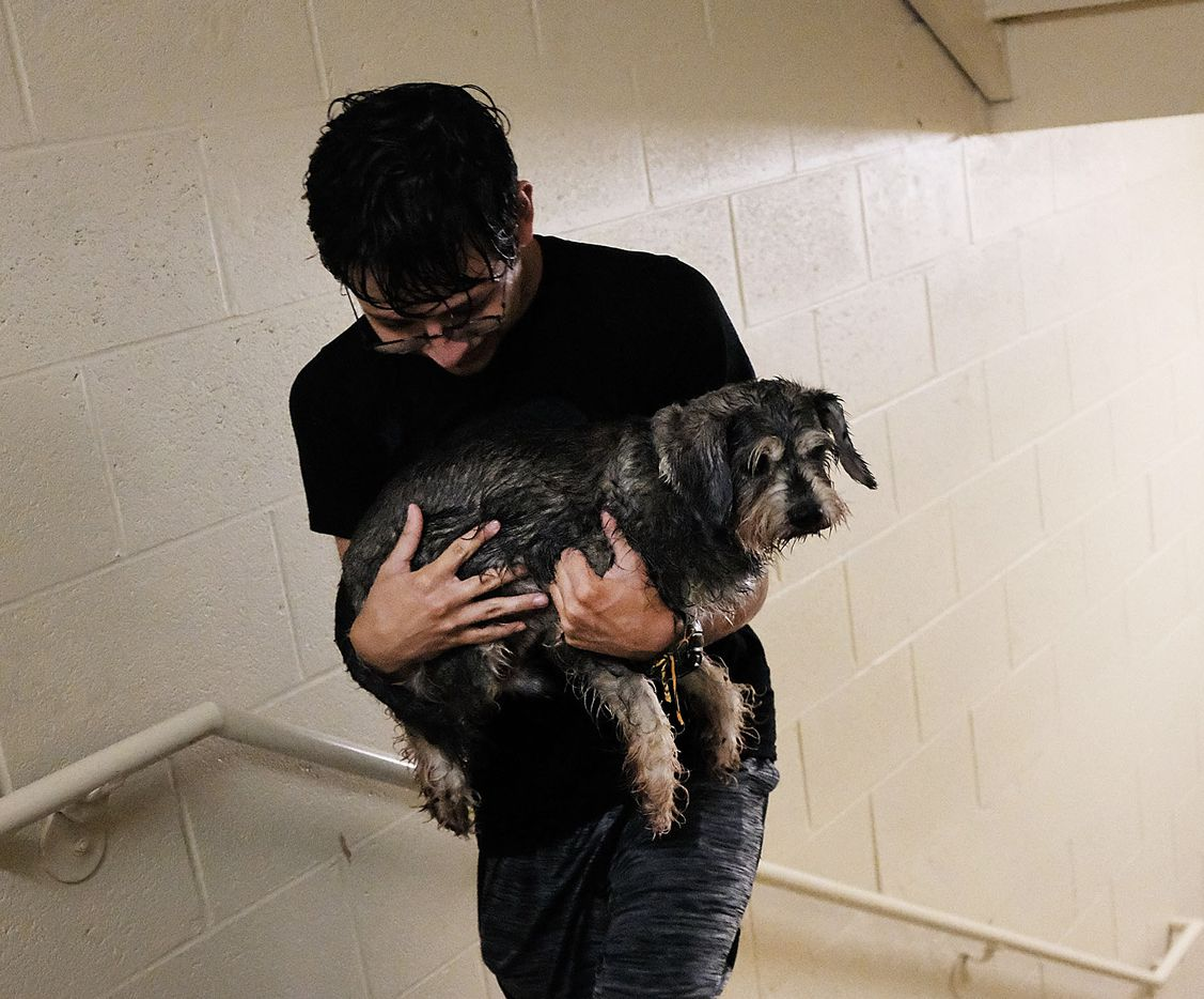 A soaking wet Fernando Oropeza walks up the stairs after taking his dog Simon out for a walk in driving rain while holed up at a hotel on September 10, 2017 in Fort Myers, Florida. With businesses closed, thousands in shelters and a mandatory evacuation in coastal communities, the Fort Myers area is preparing for a possibly catastrophic storm.