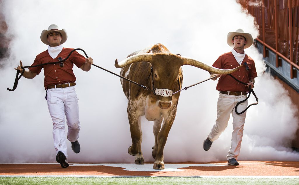 Texas Longhorns mascot Bevo enters the field before a college football game between Baylor and the University of Texas on Saturday, October 13, 2018 at Darrell K Royal Memorial Stadium in Austin, Texas.