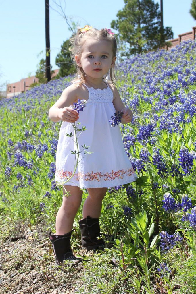Rayli Lewis, 2, enjoys a bluebonnet patch in Carrollton. Rayli may not be a criminal, but experts say picking bluebonnets can keep them from seeding properly in future seasons.