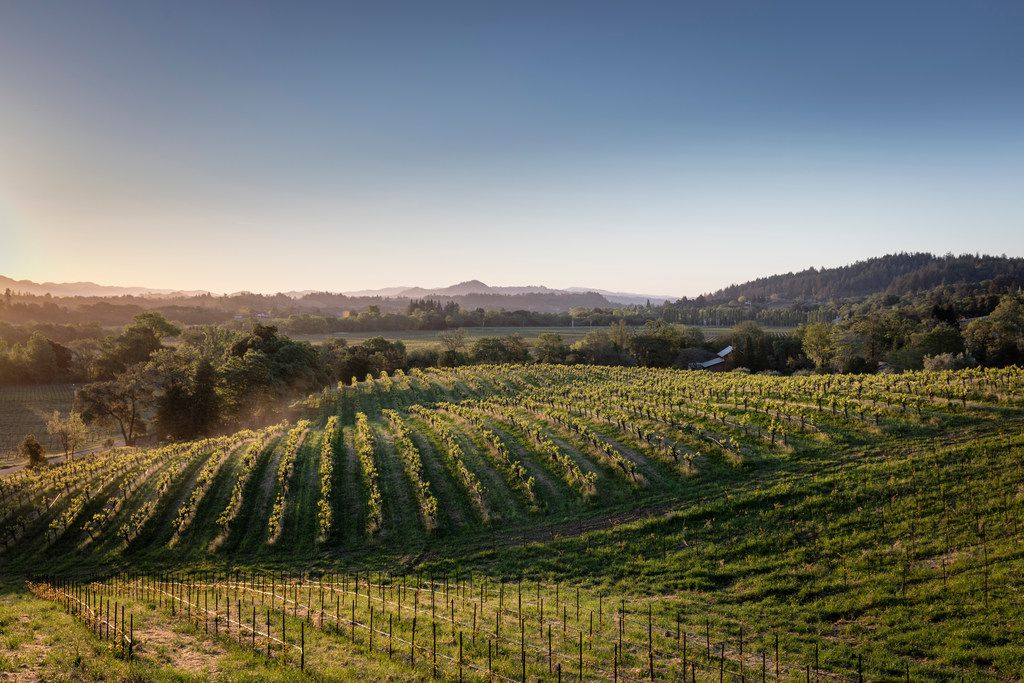 Quivira Vineyards is committed to biodynamic farming, closely monitoring the soil to ensure it contains healthy microbiotic life.