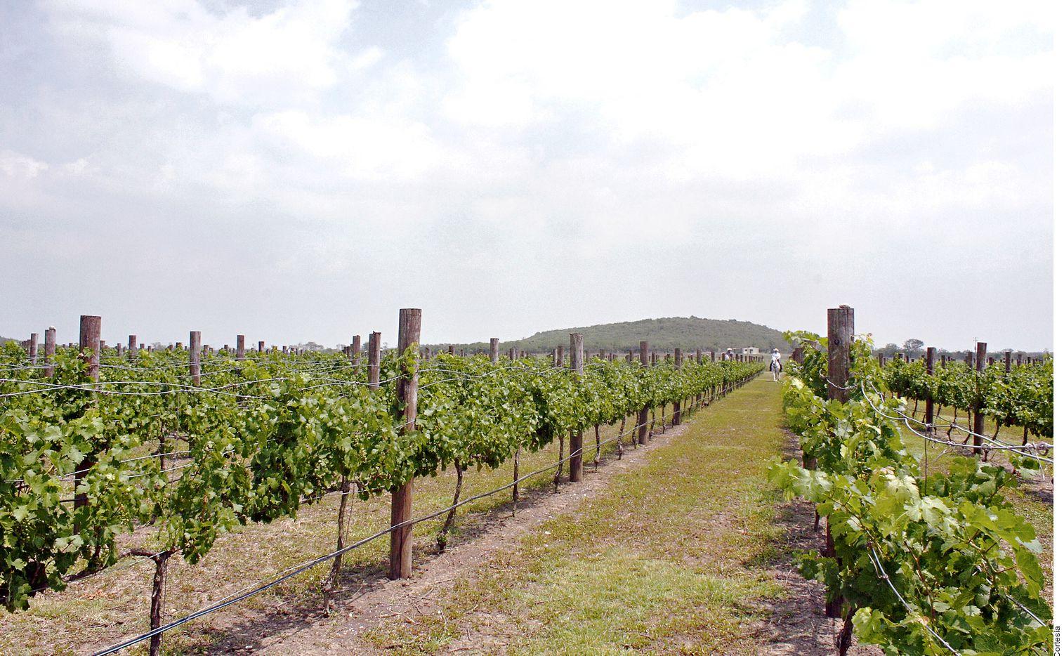 San Luis Potosí es un Estado que incursiona en la producción de vino, son pocas las vinícolas, y una que encabeza la tendencia es Cava Quintanilla.