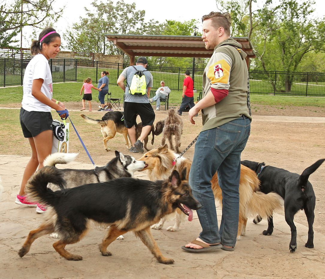 It is a crowded scene at White Rock Lake dog park in Dallas, photographed on Saturday, April 1, 2017.