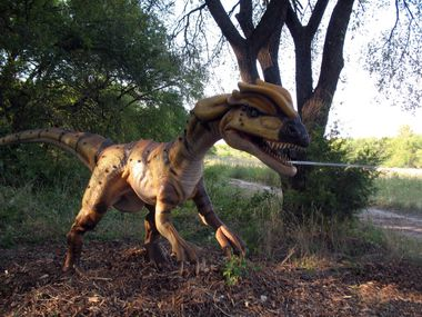 Dinosaurs Live!, a life-size animatronic dinosaurs exhibit shown in this file photo, returns to the Heard Natural Science Museum & Wildlife Sanctuary this weekend.