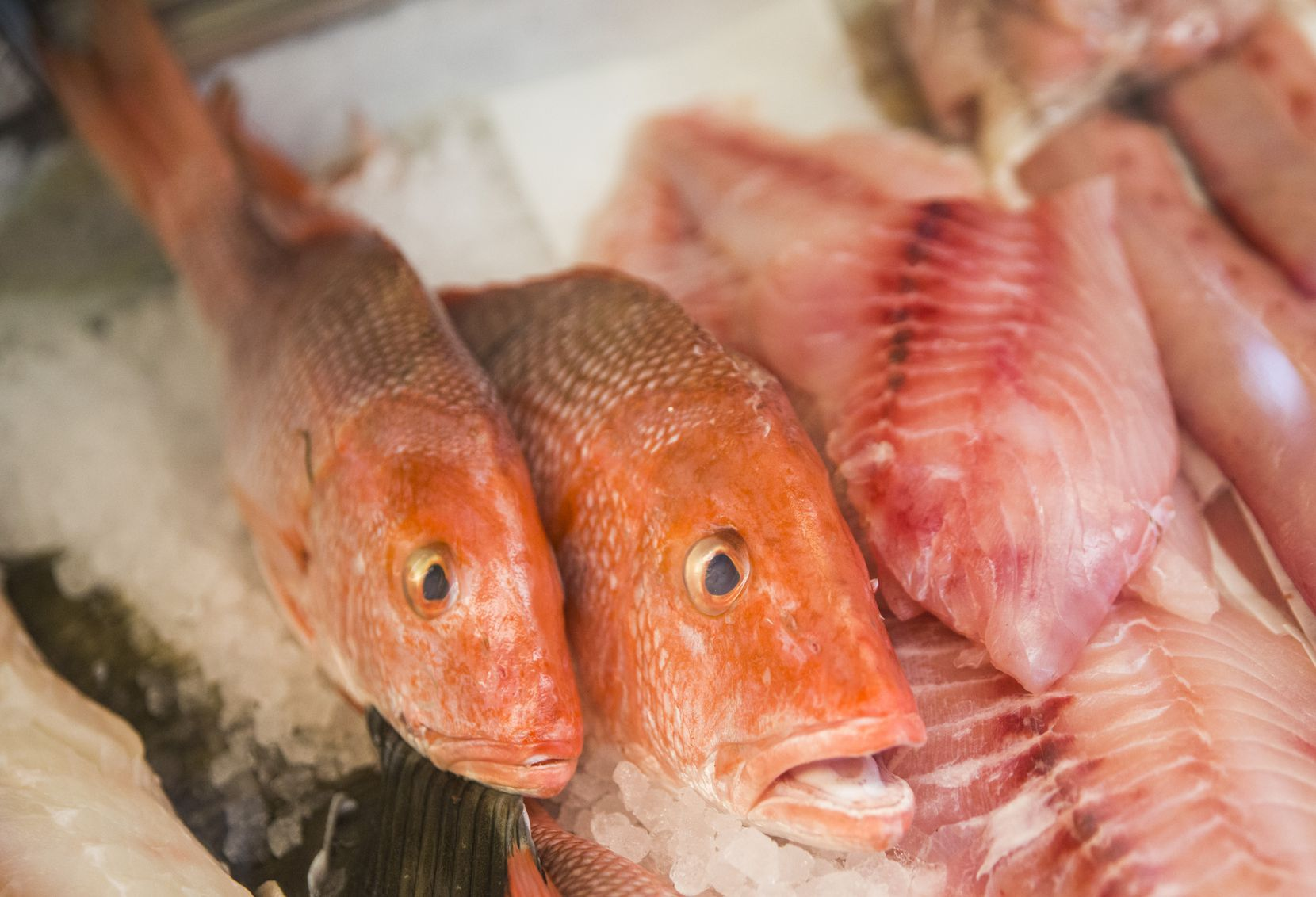 Two whole red snappers are on display among other fish at Sea Breeze Fish Market in Plano.