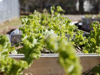 Un espacio de cultivo comunitario en Hatcher Station Farm localizada en un lote baldío propiedad de DART.