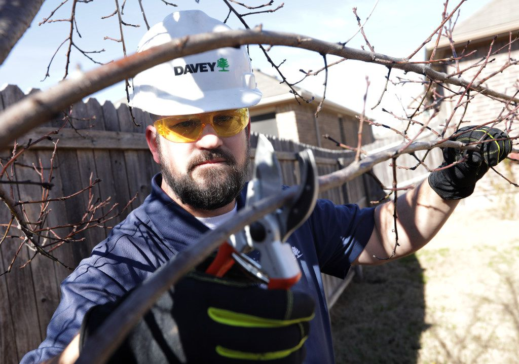 Cox says the advantage of pruning fruit trees in late winter instead of spring is that you can better see the tree's structure with the leaves gone.