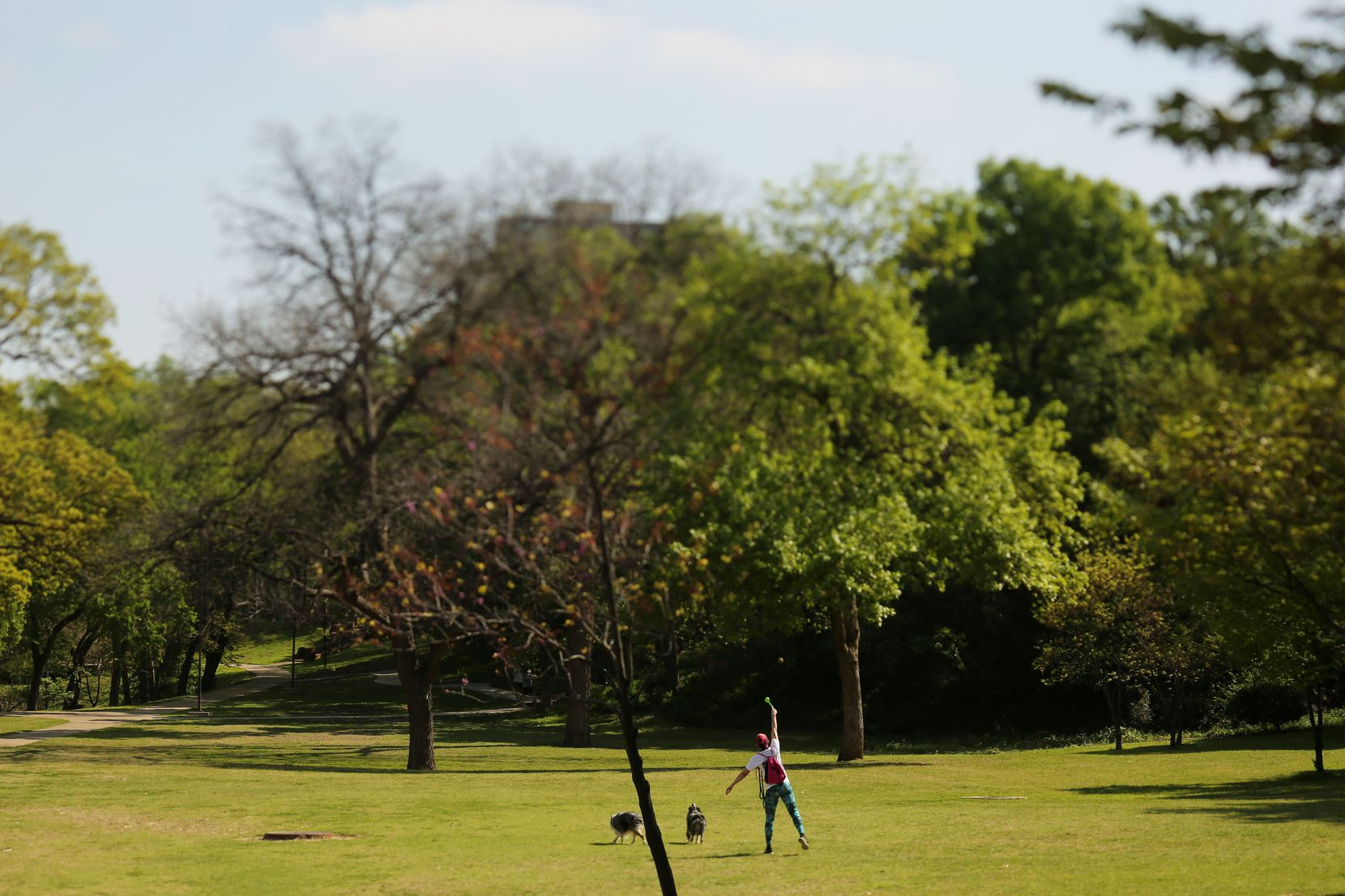 In response to the controversy that broke out over proposed changes for Reverchon Park, the Park Board last month passed new procedures that will allow it to gauge community interest before any official requests for proposals go out.