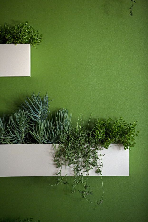 Plants hang from wall-mounted containers at Americano, a new downtown Dallas restaurant.