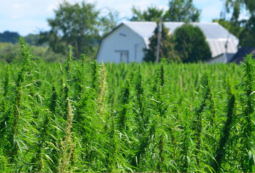 Texas' hemp industry is poised to grow after state lawmakers legalized the crop earlier this year.