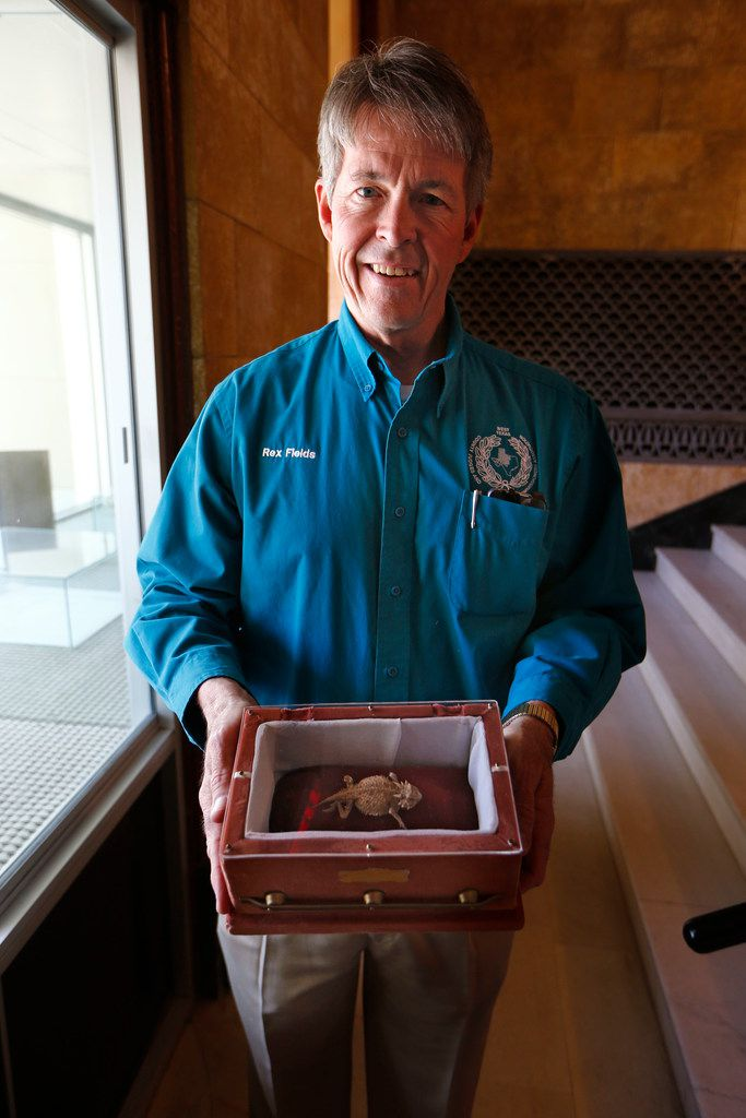 Eastland County Judge Rex Fields holds the embalmed body of Old Rip in a special display case.