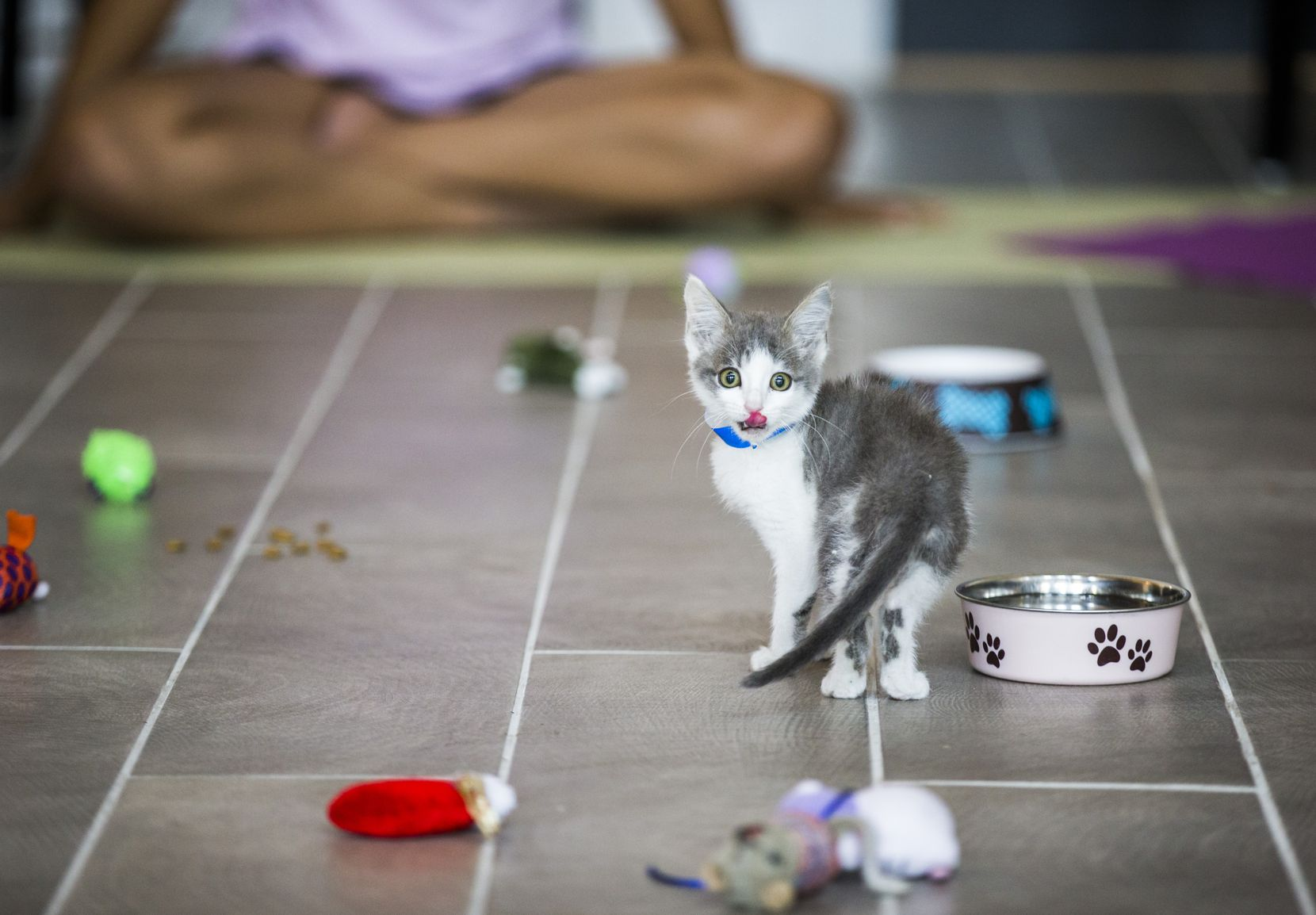 A kitten licked its lips during a yoga class.