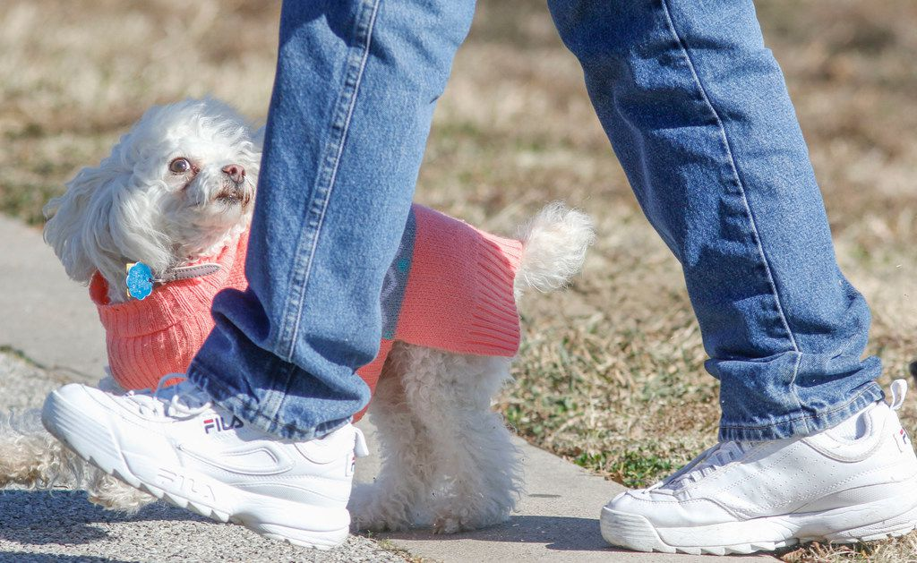 Estrella, dressed for the cold weather, keeps up with owner Oscar Mireles during a trip to Bachman Lake in January.