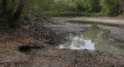 A beaver lodge sits next to the partially drained pond, water from which was used to control dust from construction of a golf course near the Trinity River Audubon Center.