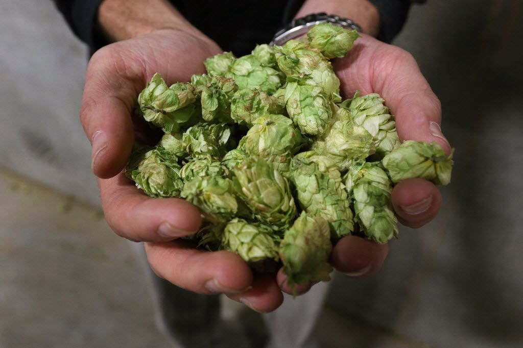 There are several different types of hops. Mosaic, which smells like a mixture of stone fruit, citrus and tropical fruit, is one of the most popular.