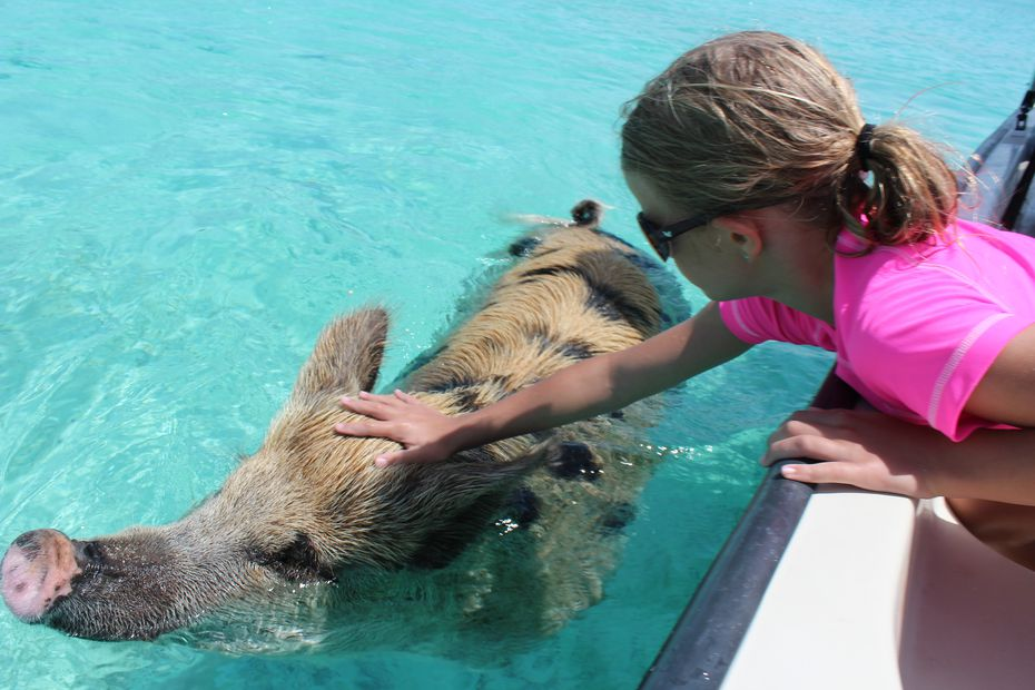 The animals attract numerous tour boats, and they're accustomed to visitors.
