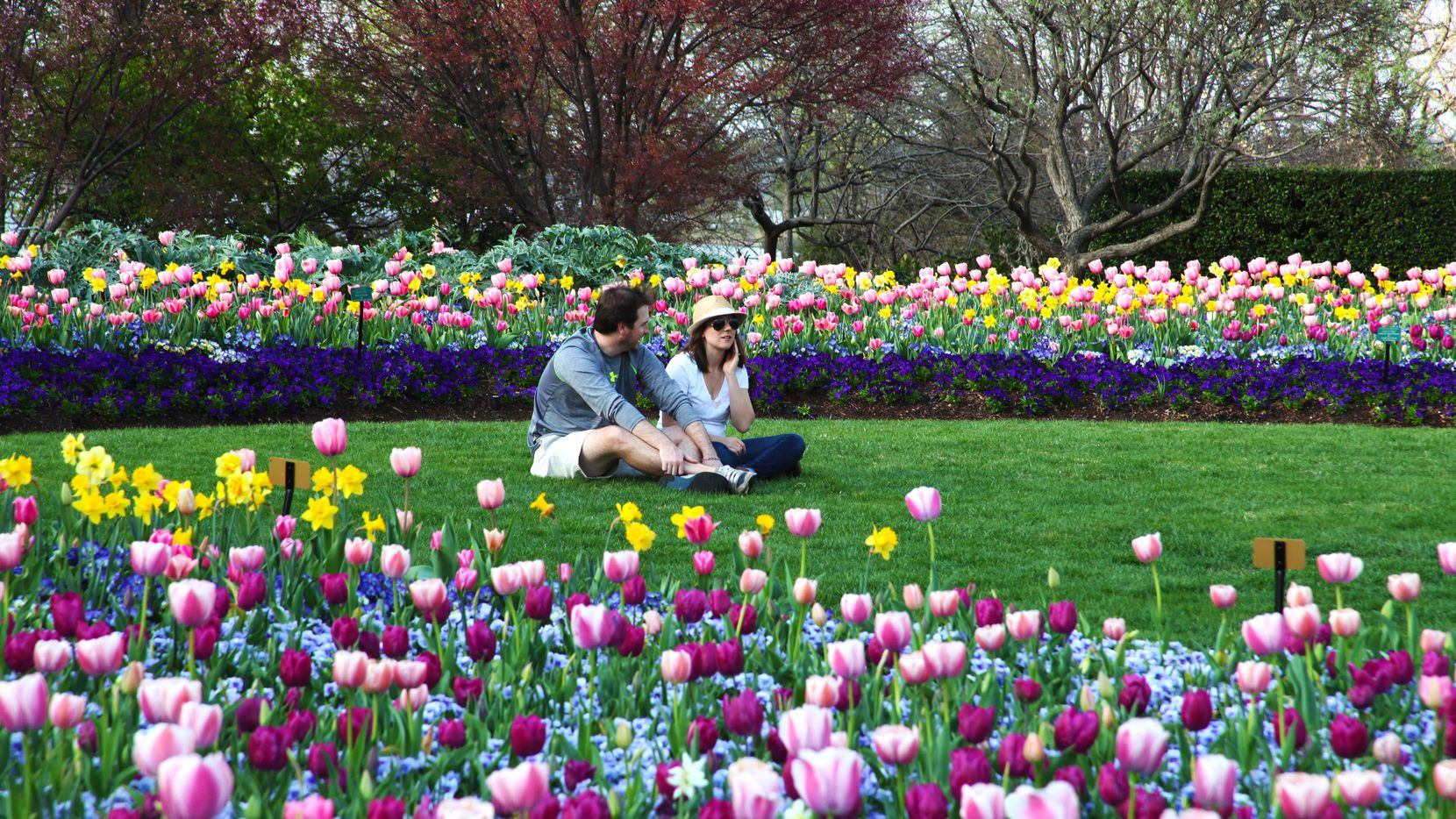 El festival Dallas Blooms llega al jardín botánico con diferentes actividades hasta el 12 de abril.