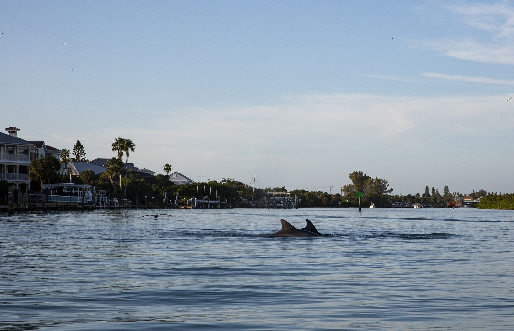 A kayak paddle in the Venice Inlet, near the city's manmade jetties, lets visitors get up close with dolphins and other aquatic wildlife.