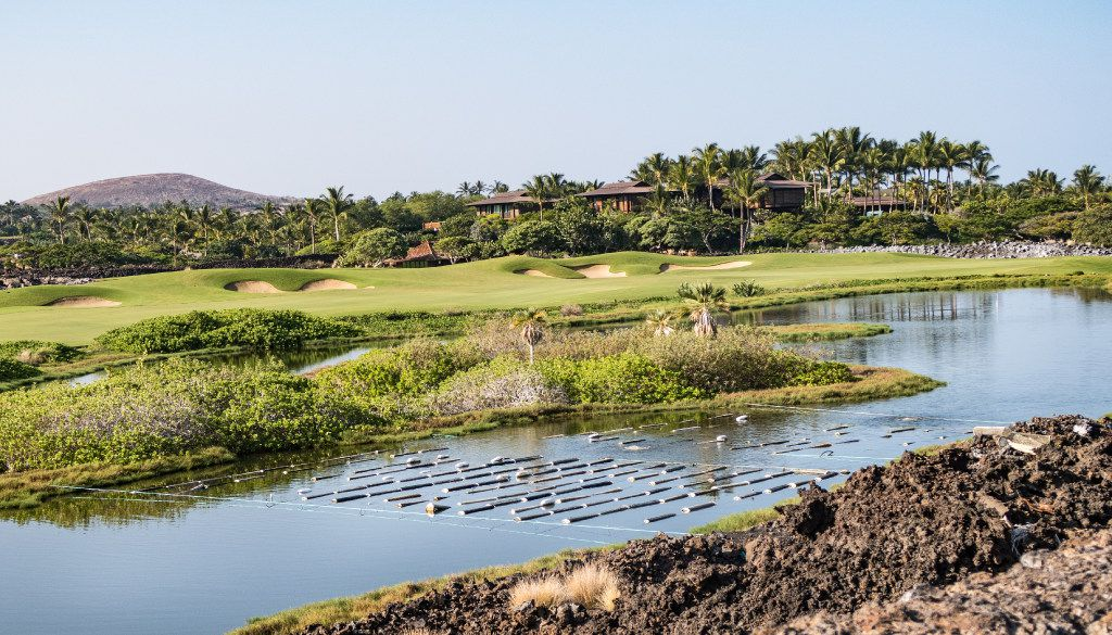 About 100,000 East Coast oysters grown in this pond on the the Four Seasons Hualalai golf course supply the resort's restaurant with sweet, briny oysters.