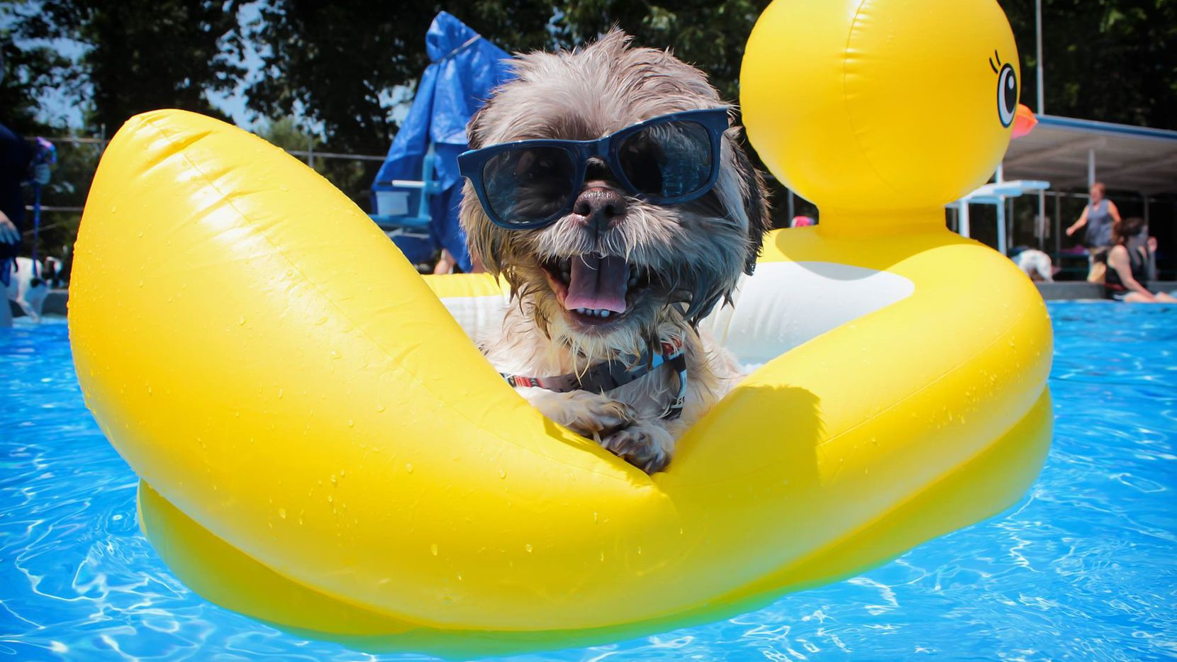 This year's Pooch Paddle at Jester Park Pool in Corsicana is Sunday.