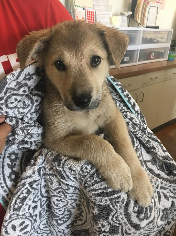 Anabelle is staying at the Austin Animal Center until her owner, who was arrested after leaving her in a hot car, pays fees. But a court ruled that Chandler Bullen can have her back.