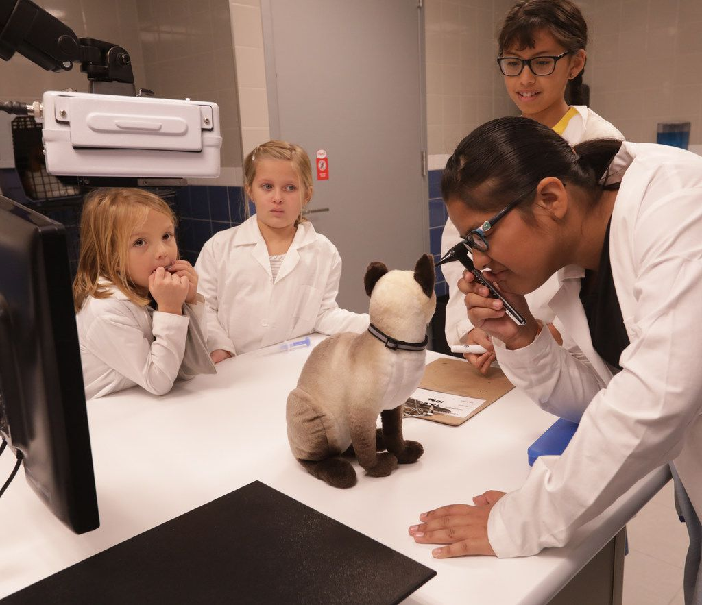 Children practice their veterinary skills  on a toy cat.