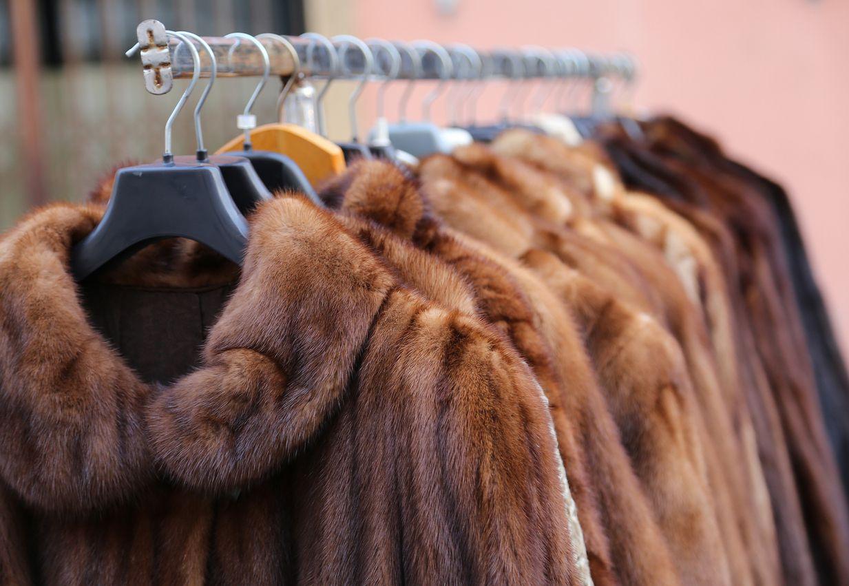 Abrigos de piel animal en una tienda de lujo.
