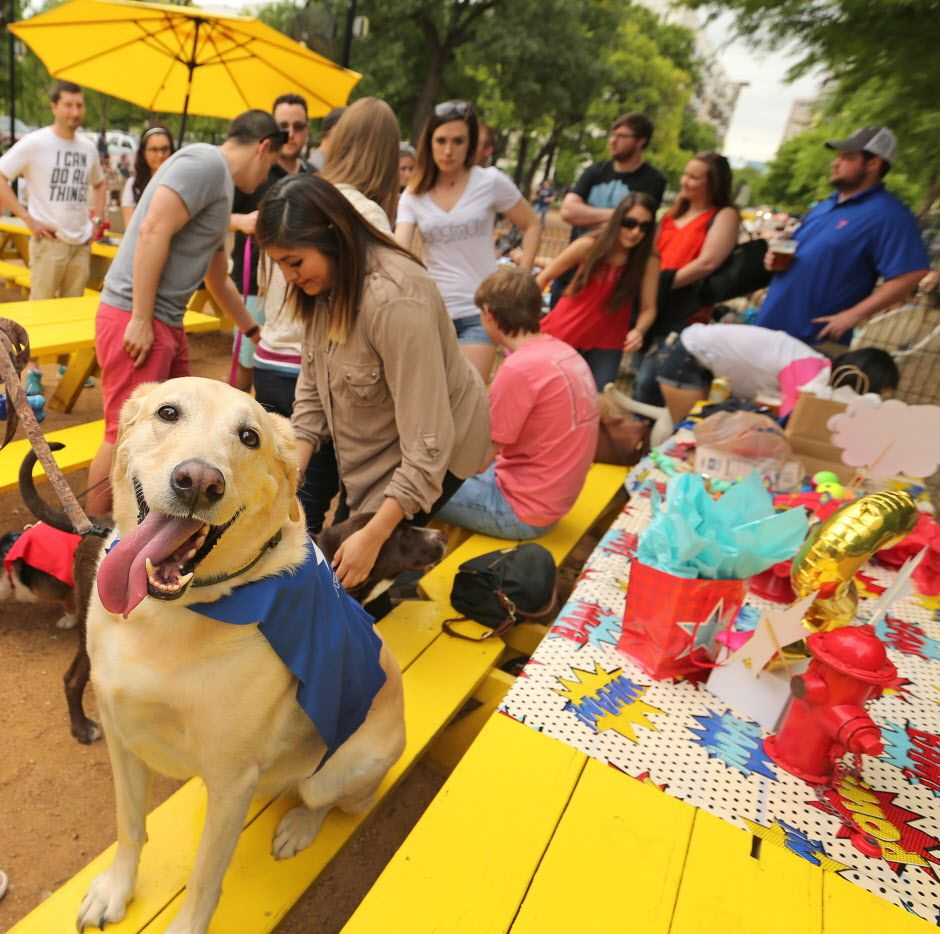 Mutts Canine Cantina