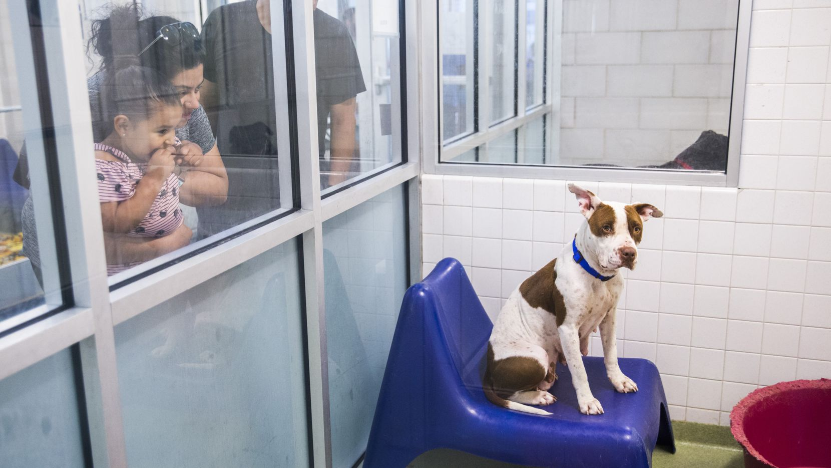"Kallie Guerrero, 3, Rebecca Lopez and Richard Lopez visited Dallas Animal Services earlier this year as they considered adopting a dog. Plano is among the shelters nationwide participating in a ""Clear the Shelters"" event in August."