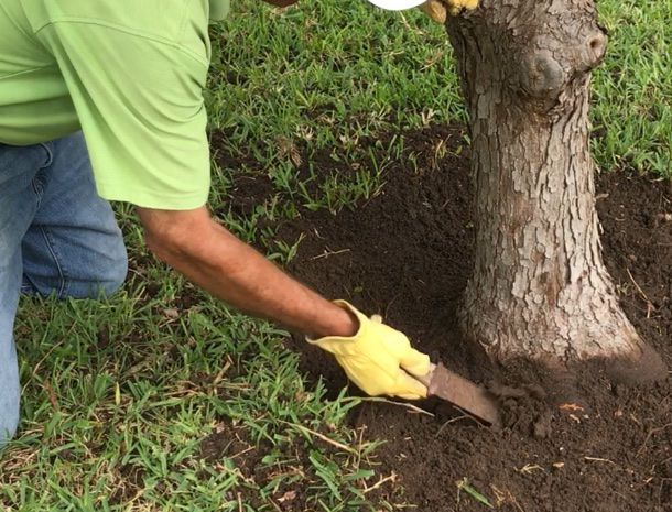 You can loosen soil with a hori hori knife before blowing or brushing it away. But hiring an arborist is probably your best bet.