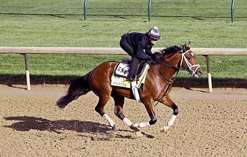 Patch, or Parche, es un caballo con un solo ojo que competirá en el Kentucky Derby. Foto AP