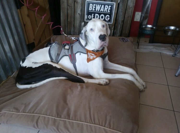 Meet Samson, a 10-year-old Great Dane owned by a homeless man. Samson's health issues set off a chain reaction in one North Texas city that brought neighbors together to help someone they didn't even know.