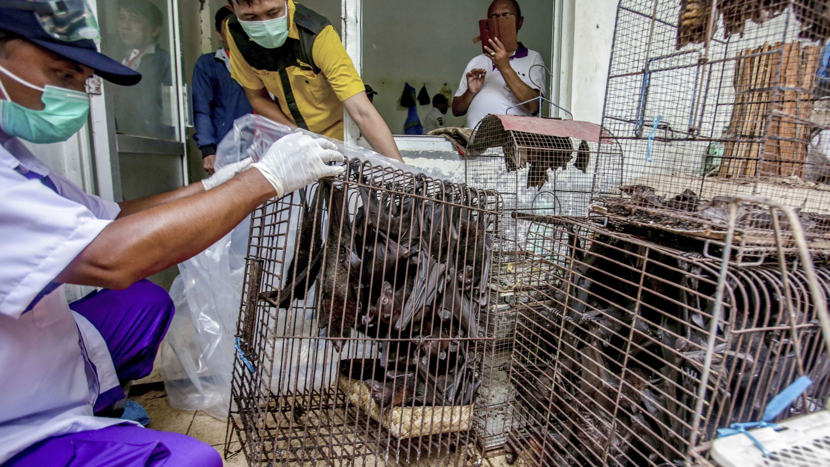 Health officials inspect bats to be confiscated and culled in the wake of coronavirus outbreak at a live animal market in Solo, Central Java, Indonesia.