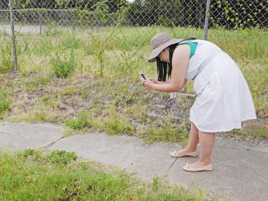 """Monica Huerta uses the Dallas 311 phone app to record grass growing over a sidewalk on Akard Street during the Cedars Neighborhood Association's """"code crawl"""" Saturday in Dallas."""