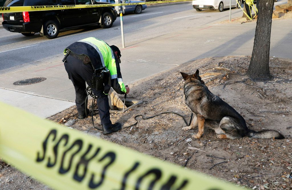 A Dallas police officer looks for a gun as his dog, Devil, waits at the intersection of Pearl and Bryan streets after a shooting occurred on a DART train Friday morning.